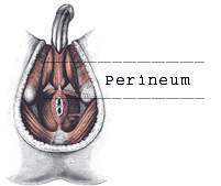 perineum massage and a bent penis 2