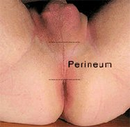 perineum massage and a bent penis